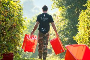 Vendemmia Sociale 2018 | Tenuta Amadio